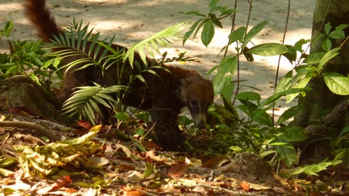 May 1st 2012 - Tikal, Guatemala (1/4)